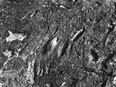Sorghum sp. impressions on a ceramic fragment from site Shurab el-Gash (SEG) 9, 2nd mill. BC. / Impressioni di sorgo su un frammento ceramico, sito Shurab el-Gash (SEG) 9, II mill. a.C.