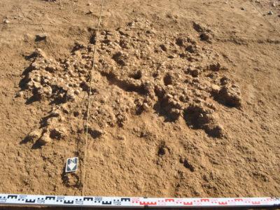 Shell midden at site UA50 (late 6th mill. BC)./ Chiocciolaio sul sito UA50 (fine del VI millennio a.C.).