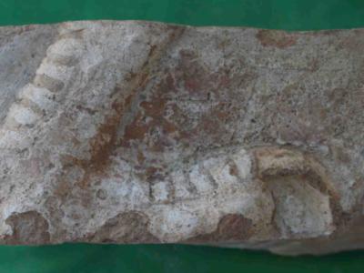 Mattone invetriato a rilievo da Tol-e Ajori, dettaglio della zampa posteriore di un mushkhusshu / Relief glazed brick from Tol-e Ajori, detail of the rear leg of a mushkhusshu.
